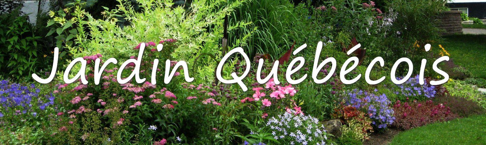 Jardin qu b cois photo plante vivace annuelle tropicale for Plante verte vivace exterieur